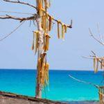 Peix Sec il piatto tipico di Formentera